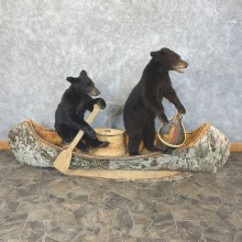 Captains Classic Canoe Black Bear Cubs Taxidermy Mount For Sale