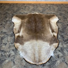 Caribou Taxidermy Rug For Sale #22753 @ The Taxidermy Store