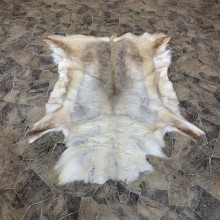 Caribou Taxidermy Rug For Sale #23336 @ The Taxidermy Store