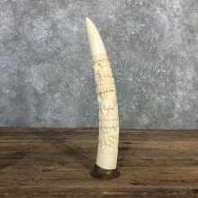 Carved Hippopotamus Tooth Taxidermy Mount For Sale