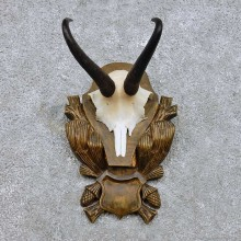 Chamois Skull Cap & Horn Mount For Sale #14446 @ The Taxidermy Store