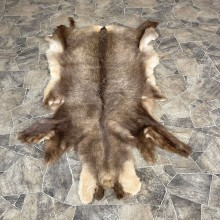 Chamois Tanned Hide For Sale #25266 @ The Taxidermy Store