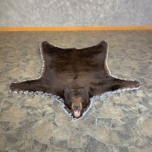 Chocolate Black Bear Full-Size Taxidermy Rug For Sale
