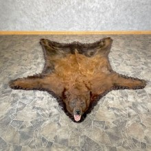 Chocolate Black Bear Full-Size Rug For Sale #24684 @ The Taxidermy Store