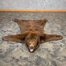 Cinnamon Phase Black Bear Full-Size Rug For Sale #22697 @ The Taxidermy Store