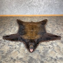 Color Phase Black Bear Full-Size Rug For Sale #23323 @ The Taxidermy Store