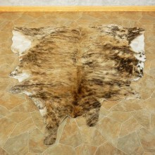 Cow Hide For Sale #15703 @ The Taxidermy Store