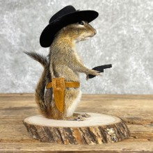 Cowboy Chipmunk Novelty Taxidermy Mount For Sale