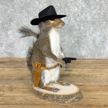 Cowboy Squirrel Novelty Mount For Sale #22435 @ The Taxidermy Store