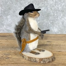 Cowboy Squirrel Novelty Mount For Sale #22436 @ The Taxidermy Store 1