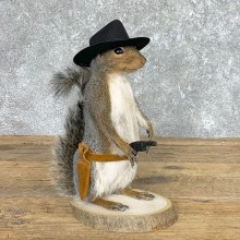 Cowboy Squirrel Novelty Mount For Sale #22438 @ The Taxidermy Store