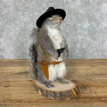Cowboy Squirrel Novelty Mount For Sale #23046 @ The Taxidermy Store