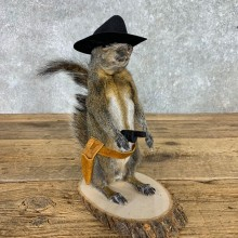 Cowboy Squirrel Novelty Mount For Sale #23457 @ The Taxidermy Store