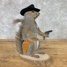 Cowboy Squirrel Novelty Mount For Sale #23461 @ The Taxidermy Store