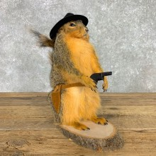 Cowboy Squirrel Novelty Mount For Sale #23463 @ The Taxidermy Store