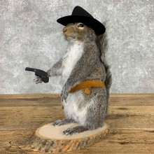 Cowboy Squirrel Novelty Mount For Sale #23464 @ The Taxidermy Store