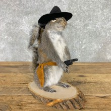 Cowboy Squirrel Novelty Mount For Sale #23466 @ The Taxidermy Store