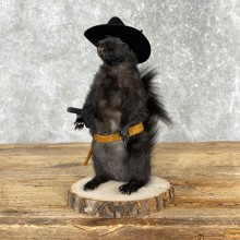 Cowboy Squirrel Novelty Mount For Sale #24064 @ The Taxidermy Store