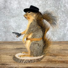 Cowboy Squirrel Novelty Mount For Sale #24065 @ The Taxidermy Store