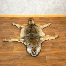 Coyote Rug Taxidermy Mount For Sale #17852 @ The Taxidermy Store