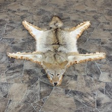 Coyote Rug Taxidermy Mount For Sale #21183 @ The Taxidermy Store