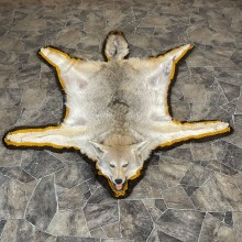 Coyote Rug Taxidermy Mount For Sale #24679 @ The Taxidermy Store