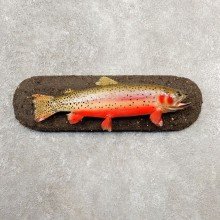 Cutthroat Trout Fish Mount For Sale #20580 @ The Taxidermy Store
