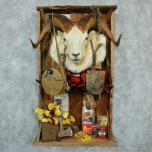 Captain's Classic Dall Sheep Taxidermy Display For Sale