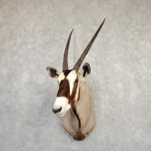 Gemsbok Oryx Taxidermy Shoulder Mount For Sale