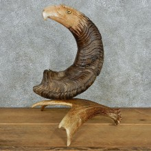 Eagle Head Bighorn Carving Taxidermy Mount #13078 For Sale @ The Taxidermy Store