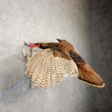 Eastern Turkey Bird Mount For Sale #20605 @ The Taxidermy Store
