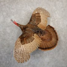 Eastern Turkey Bird Mount For Sale #20700 @ The Taxidermy Store