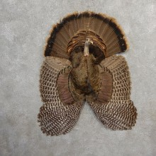 Eastern Wild Turkey Bearded Hen Half Life Size Mount #21141 For Sale @ The Taxidermy Store