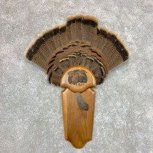 Eastern Wild Turkey Fan Taxidermy Mount For Sale