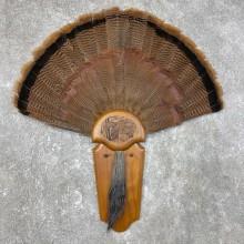 Eastern Wild Turkey Fan Taxidermy Mount For Sale