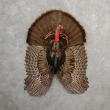 Eastern Wild Turkey Half Life Size Mount #21140 For Sale @ The Taxidermy Store