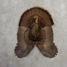 Eastern Wild Turkey Half Life Size Mount #21142 For Sale @ The Taxidermy Store