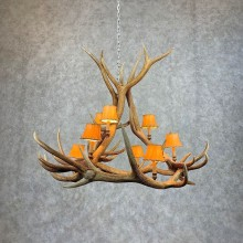 Elk Antler Chandelier For Sale #21279 @ The Taxidermy Store
