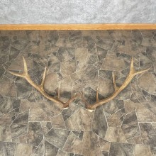 Elk Antler Craft Pack For Sale #25091 @ The Taxidermy Store