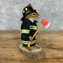 Firefighter Squirrel Novelty Mount For Sale #23468 @ The Taxidermy Store