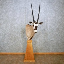 African Gemsbok Pedestal Mount For Sale #14391 @ The Taxidermy Store