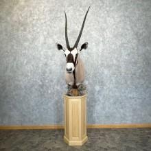 Gemsbok Oryx Taxidermy Shoulder Pedestal Mount For Sale