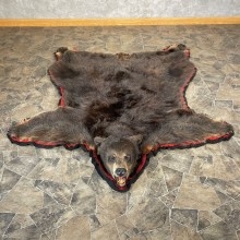 Glacier Bear Full-Size Taxidermy Rug For Sale