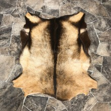 Goat Hide Taxidermy Tanned Skin For Sale #20092 @ The Taxidermy Store