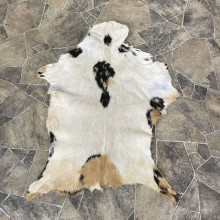 Goat Hide Taxidermy Tanned Skin For Sale #25317 @ The Taxidermy Store