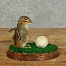 Golfing Squirrel Novelty Mount For Sale #16113 @ The Taxidermy Store