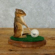 Golfing Squirrel Novelty Mount For Sale #18463 @ The Taxidermy Store