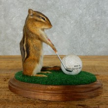 Golfing Squirrel Novelty Mount For Sale #18465 @ The Taxidermy Store