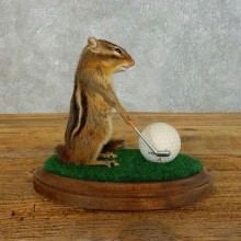 Golfing Squirrel Novelty Mount For Sale #18467 @ The Taxidermy Store