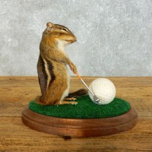 Golfing Squirrel Novelty Mount For Sale #18470 @ The Taxidermy Store